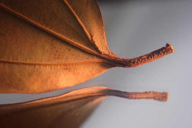 bay-leaf-1329356